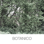 BOTANICOS copia