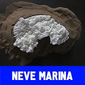 neve_marina